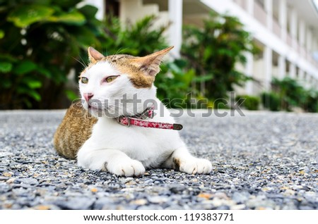 The beautiful cat is sitting on ground - stock photo