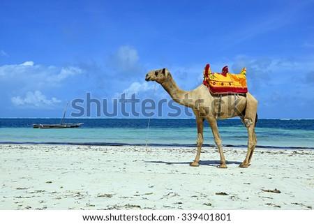 The beautiful coast with white sand Diani Beach in Kenya - stock photo
