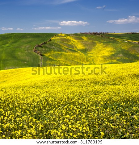 The beautiful colors of the spring in the landscapes of Crete Senesi in Tuscany