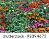 the beautiful flowers - stock photo