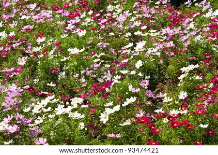 the beautiful flowers - stock photo