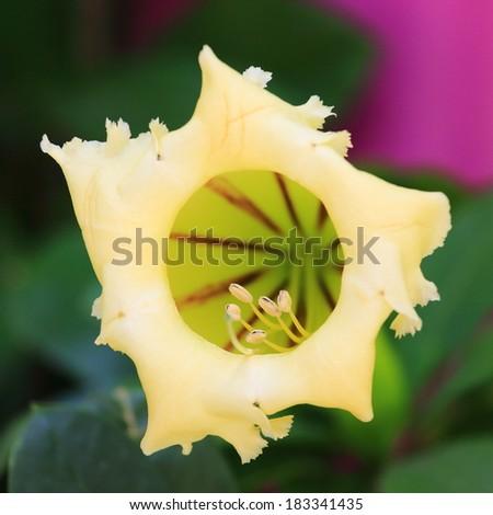 the beautiful flowers in garden - stock photo