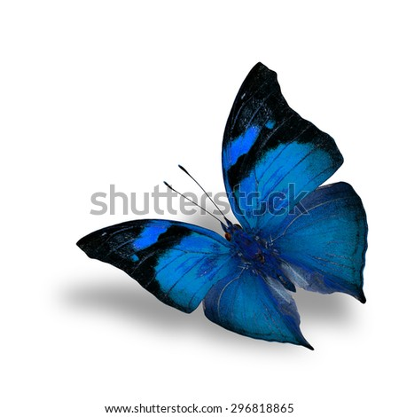 The beautiful flying blue butterfly on white background with shadow beneath - stock photo