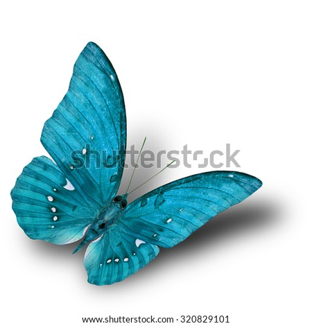 The beautiful flying blue butterfly on white background with soft shadow beneath - stock photo