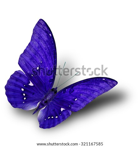 The beautiful flying dark blue butterfly on white background with soft shadow beneath - stock photo