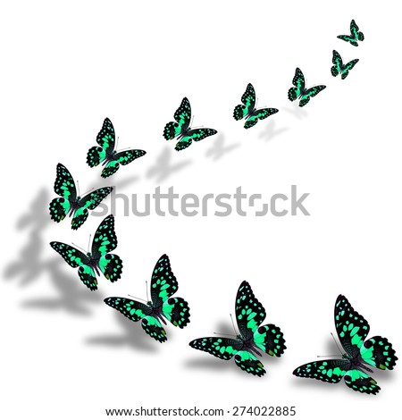 The beautiful flying green butterflies in a great series of taking off with nice shadow beneath - stock photo