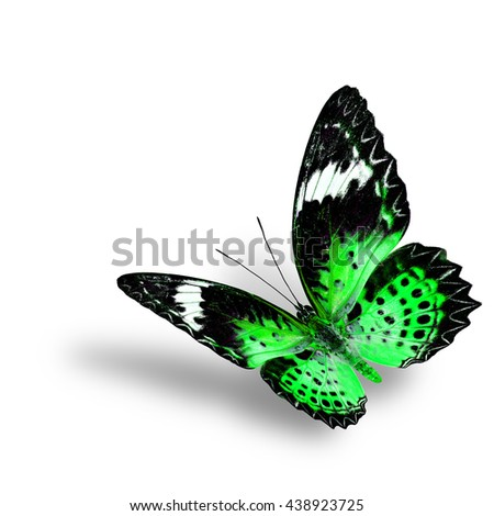 The beautiful flying green butterfly, female of Leopard Lacewing butterfly in fancyl color profile on white background with soft shadow beneath - stock photo