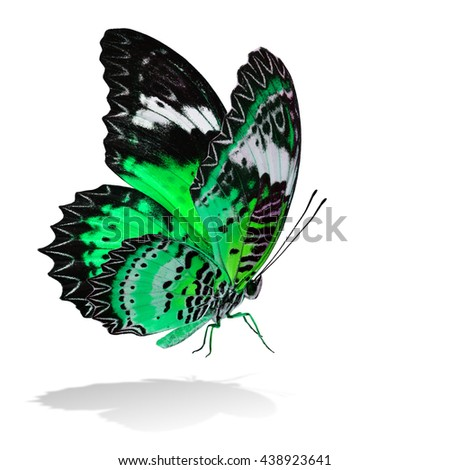 The beautiful flying green butterfly, Leopard Lacewing butterfly in fancy color profile on white background with all legs body and wings details and soft shadow beneath - stock photo