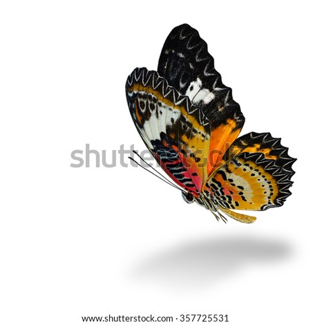The beautiful flying Leopard Lacewing butterfly (Cethosia cyane) in natural color profile isolated on white background with soft shadow beneath - stock photo