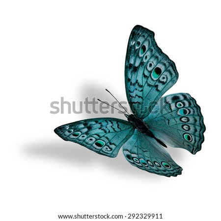 The beautiful flying light green butterfly (Junonia atlites ) isolated on white background with soft shadow beneath - stock photo