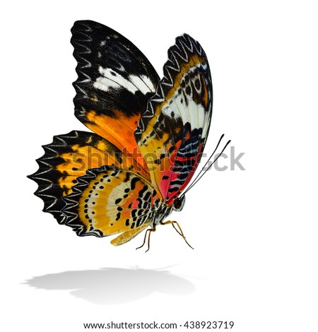 The beautiful flying orange and red butterfly, Leopard Lacewing butterfly in original color profile on white background with all legs body and wings details and soft shadow beneath - stock photo