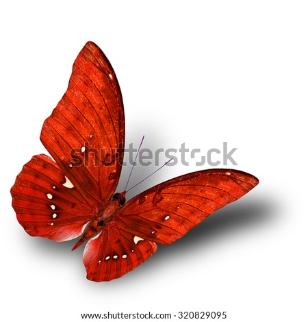 The beautiful flying orange butterfly on white background with soft shadow beneath - stock photo