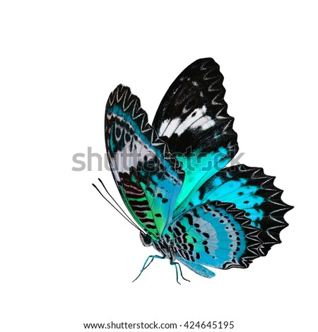 The beautiful flying pale blue butterfly, Leopard Lacewing butterfly in fancy color profile isolated on white background with all legs body and wings
