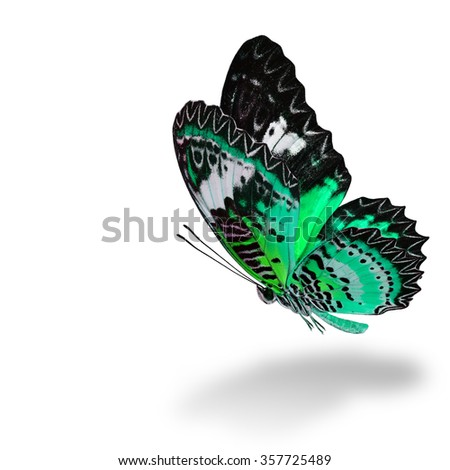 The beautiful flying pale green butterfly, Leopard Lacewing butterfly (Cethosia cyane) in fancy color profile on white background with soft shadow beneath - stock photo