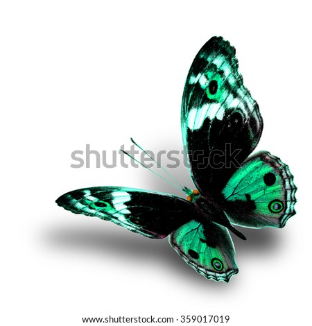 the beautiful flying pale green butterfly with nice soft shadow beneath on white background, blue pansy butterfly in fancy color profile - stock photo