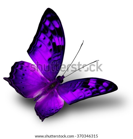The beautiful flying purple butterfly on white background with shade beneath - stock photo
