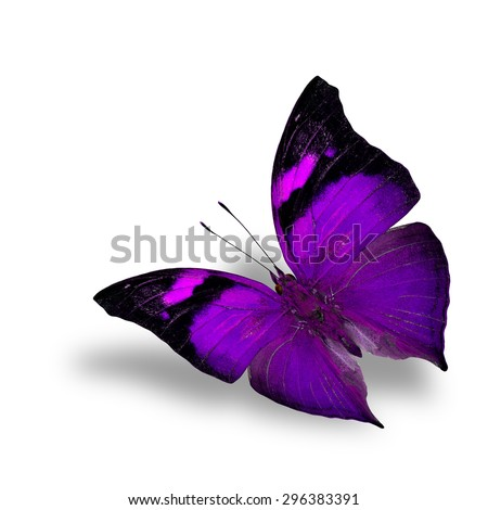 The beautiful flying purple butterfly on white background with shadow beneath - stock photo