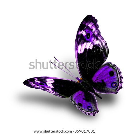the beautiful flying purple butterfly with nice soft shadow beneath on white background, blue pansy butterfly in fancy color profile - stock photo