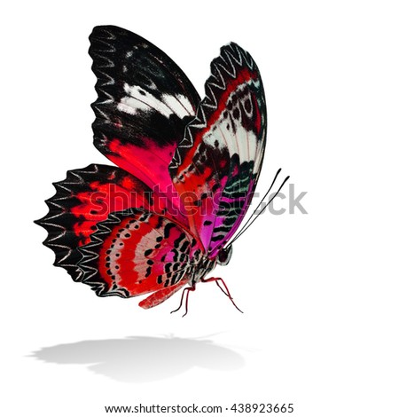 The beautiful flying red and pink butterfly, Leopard Lacewing butterfly in fancy color profile on white background with all legs body and wings details and soft shadow beneath - stock photo