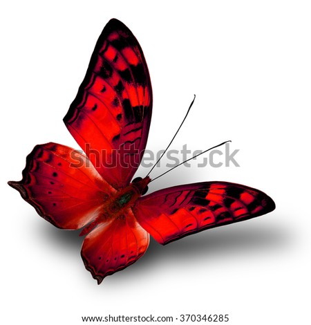 The beautiful flying red butterfly on white background with shade beneath - stock photo