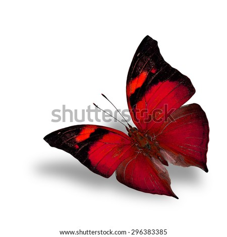 The beautiful flying red butterfly on white background with shadow beneath - stock photo