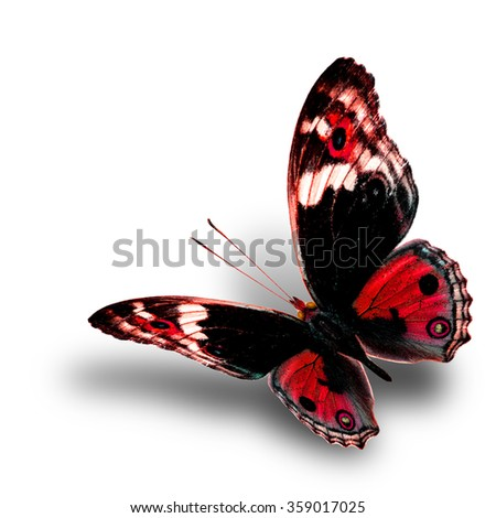 the beautiful flying red butterfly with nice soft shadow beneath on white background, blue pansy butterfly in fancy color profile - stock photo