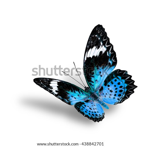 The beautiful flying turquoise blue butterfly, female of Leopard Lacewing butterfly in fancyl color profile on white background with soft shadow beneath - stock photo