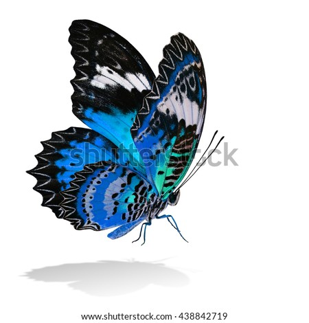 The beautiful flying turquoise blue butterfly, Leopard Lacewing butterfly in fancy color profile on white background with all legs body and wings details and soft shadow beneath - stock photo
