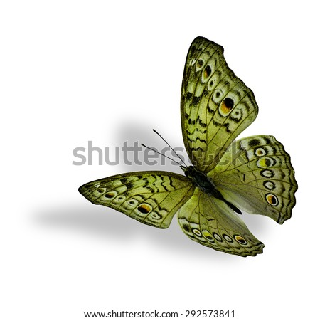 The beautiful flying yellow butterfly (Junonia atlites ) isolated on white background with soft shadow beneath - stock photo