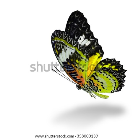 The beautiful flying yellow butterfly, Leopard Lacewing butterfly (Cethosia cyane) in fancy color profile on white background with soft shadow beneath