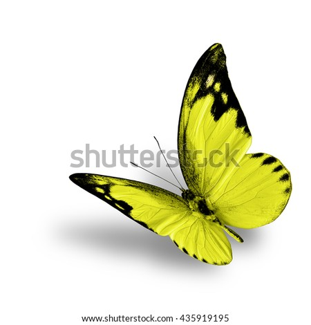 The beautiful flying yellow butterfly, Lesser Albatross in fancy color profile with fine shadow beneath on white background - stock photo