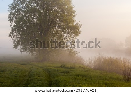The beautiful fog on a river photo