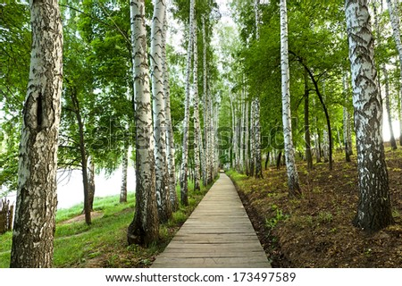 the beautiful green birch alley, spring landscape - stock photo