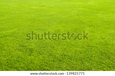 The beautiful green grass field background with nobody. - stock photo