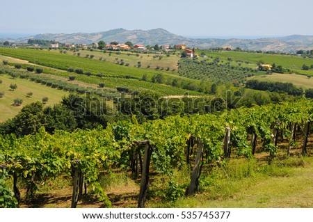 the beautiful hills around teramo which produces the Montepulciano D'Abruzzo