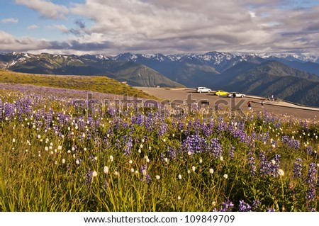 The Beautiful Hurricane Ridge at Olympic National Park - stock photo