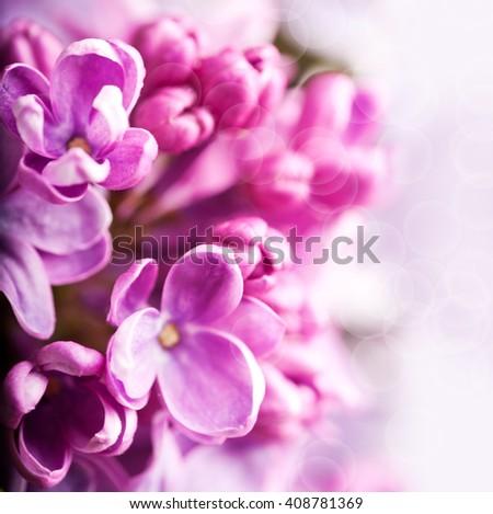 The beautiful lilac - stock photo