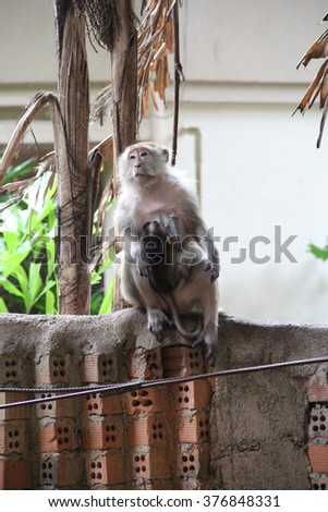 The beautiful monkeys from Krabi, Thailand, year 2015