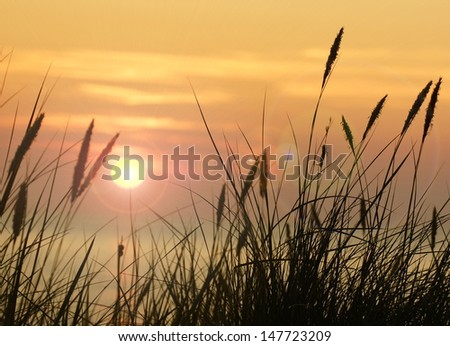 the beautiful morning sun and grasses