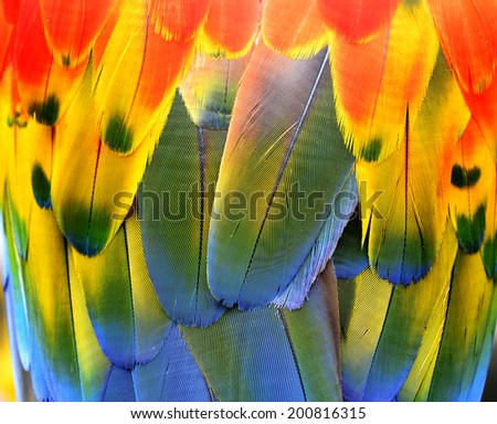 The beautiful of Scarlet Macaw bird's feathers with great in details