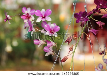 The Beautiful Orchids flower in the garden