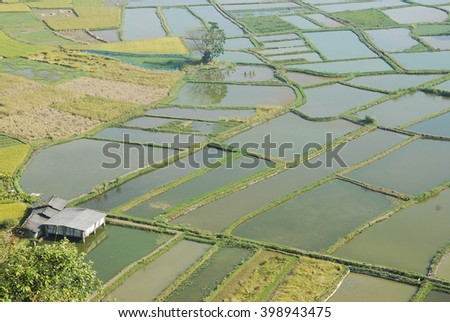 The beautiful rice fields