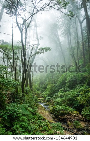The beautiful scene of tropical rain forest at Doi Inthanon National Park, Thailand. - stock photo