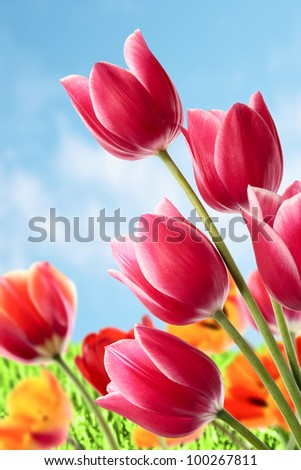 The beautiful spring flowers foreboding oncoming of summer - stock photo