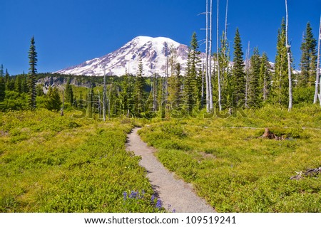 The Beautiful Trail Leading to Mt Rainier - stock photo