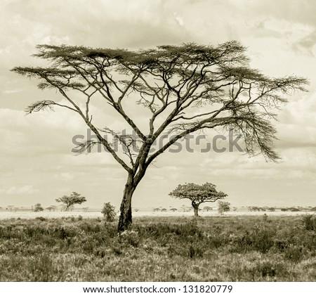 The beautiful trees in Serengeti National Park -Tanzania, Eastern Africa (stylized retro) - stock photo