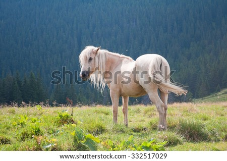 The beautiful white horse on a background Carpathian forest