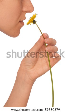 The beautiful yellow dandelion in woman's hand - stock photo