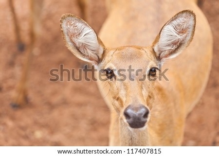 The beauty of wild deer. - stock photo