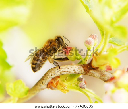 The bee collects honey on a  flower - stock photo
